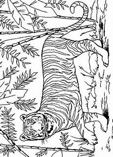 pin by one two on coloring pages jungle coloring pages