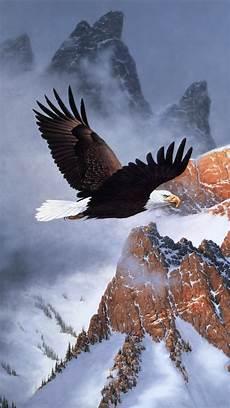 bald eagle iphone wallpaper animal bald eagle 720x1280 wallpaper id 633370 mobile