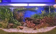 aquarium richtig reinigen sauber machen the intelligence