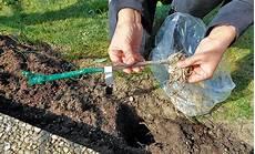 pflanzen veredelungsstelle wein anpflanzen pflanzen s 228 en pikieren selbst de