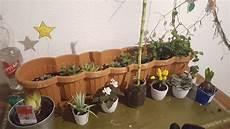 Viele Pflanzen Im Schlafzimmer Sauerstoff Biologie