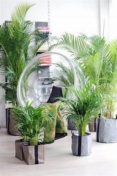 Zimmerpflanzen Nachhaltig Gut F 252 R Raumklima Gesund Und