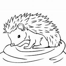 baby hedgehog coloring page these coloring pages are