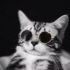 Katze Mit Sonnenbrille - pet cat glasses uv sunglasses protection eye wear