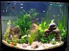 Easy Diy Ideas For Aquarium Decoration