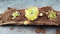 Garten Bastel Kreativ Bepflanzte Baumrinde