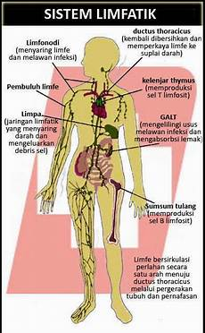 Aryani Fauziah Struktur Anatomi Dan Komponen Sistem Kekebalan