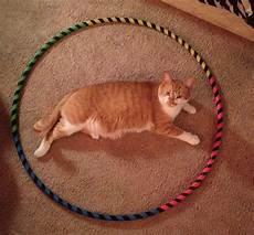 comment attraper chat dans un cercle de ruban adh 233 sif