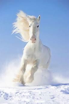 Ausmalbilder Pferde Shire 79 Besten Pferdebilder Bilder Auf Pferdebilder