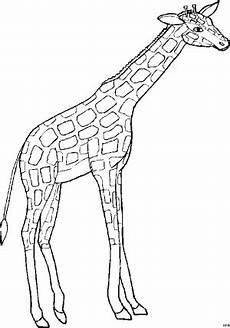 Malvorlagen Kostenlos Giraffe Giraffe 5 Ausmalbild Malvorlage Tiere