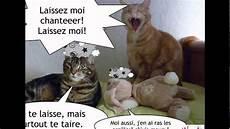 Les Chats Les Plus Droles Du Monde