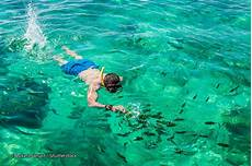 10 best snorkelling spots in phi phi skin diving spots