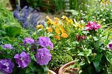 Gartenpflanzen Die 10 Sch 246 Nsten Pflanzen F 252 R Den Garten