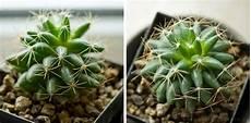 giftig oder nicht wir sortieren zimmerpflanzen