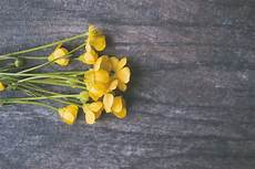 Gambar Kuning Menanam Tanaman Berbunga Senna Daun