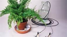 zimmerpflanzen im urlaub bewässern blumen im urlaub automatisch bew 228 ssern