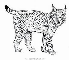 luchs 14 gratis malvorlage in tiere tiger ausmalen