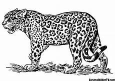 ausmalbild jaguar tier ausmalbilder kostenlos bilder