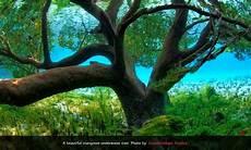 10 Gambar Pokok Tercantik Di Dunia Warna Warni