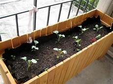 sustainability and the city setting up a balcony garden
