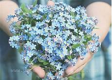 us postage forget me not search forget me nots