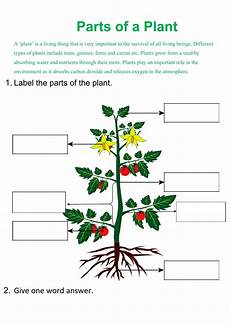 parts of plant interactive worksheet