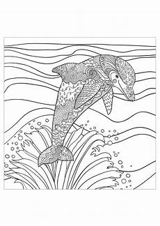 delfine 89434 delfine malbuch fur erwachsene