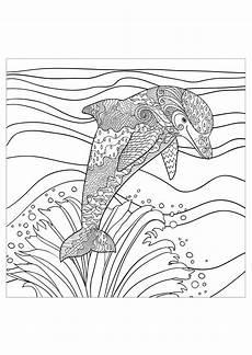 ausmalbild delfin erwachsene kinder ausmalbilder