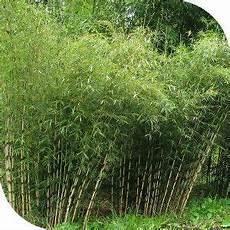 faire une haie qui pousse vite hamac bio natura jardin haie bambou