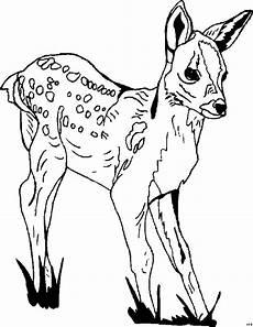 Kostenlose Malvorlagen Reh Rehkitz Ausmalbild Malvorlage Tiere