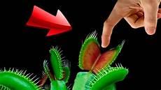 experiment fleischfressende pflanze vs wurstfinger was