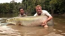 Ikan Terbesar Terkuat Di Dunia Berhasil Ditangkap