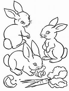 Tierbaby Ausmalbilder Baby Farm Animals Coloring Pages For Gt Gt Disney