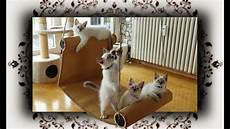 Diy Chaiselongue Schaukel F 252 R Katzen Swing For Cats