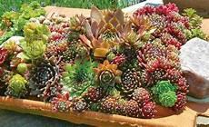почвопокровные цветы многолетники фото названия клумбы