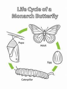 Malvorlagen Cycle Cycle Of A Monarch Butterfly Coloring Page With