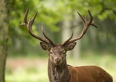 Hirsch Foto Bild Tiere Wildlife Wildlife Sonstige