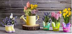 vasi in plastica colorati collection flowers potted plants daffodil hyacinth