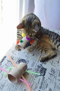katzenspielzeug selber basteln diy cat toys the show