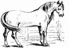 Malvorlagen Pferde Springen Kleurplaten Paarden Springen N De 24 Ausmalbilder