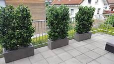 Wetterfeste Kunsthecken Auf Balkon Premium Kunstpflanzen