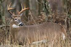 why deer have antlers what are they made of