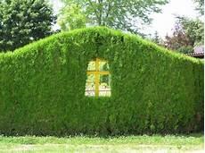 Gartengestaltung Hecke