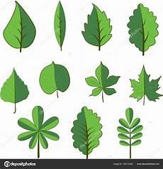 clipart alberi insieme di alberi a foglie caduche albero e foglia