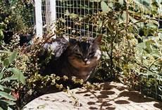 darf vermieter katze verbieten darf vermieter katzennetz auf dem balkon verbieten
