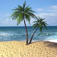 Hawaiian Tropical Palm Tree tropical palm tree 3d model