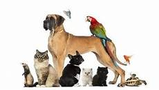 spa arras animaux p 233 tition paradis zoo d arras combat en m 233 moire du