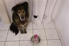 Welches Hundefutter Ist Das Beste - welches ist das beste hundefutter dipthdesign