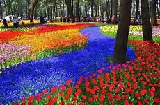 Gambar Taman Bunga Hd