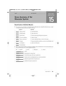 a p lab ex 15 name lab time date gross anatomy of the